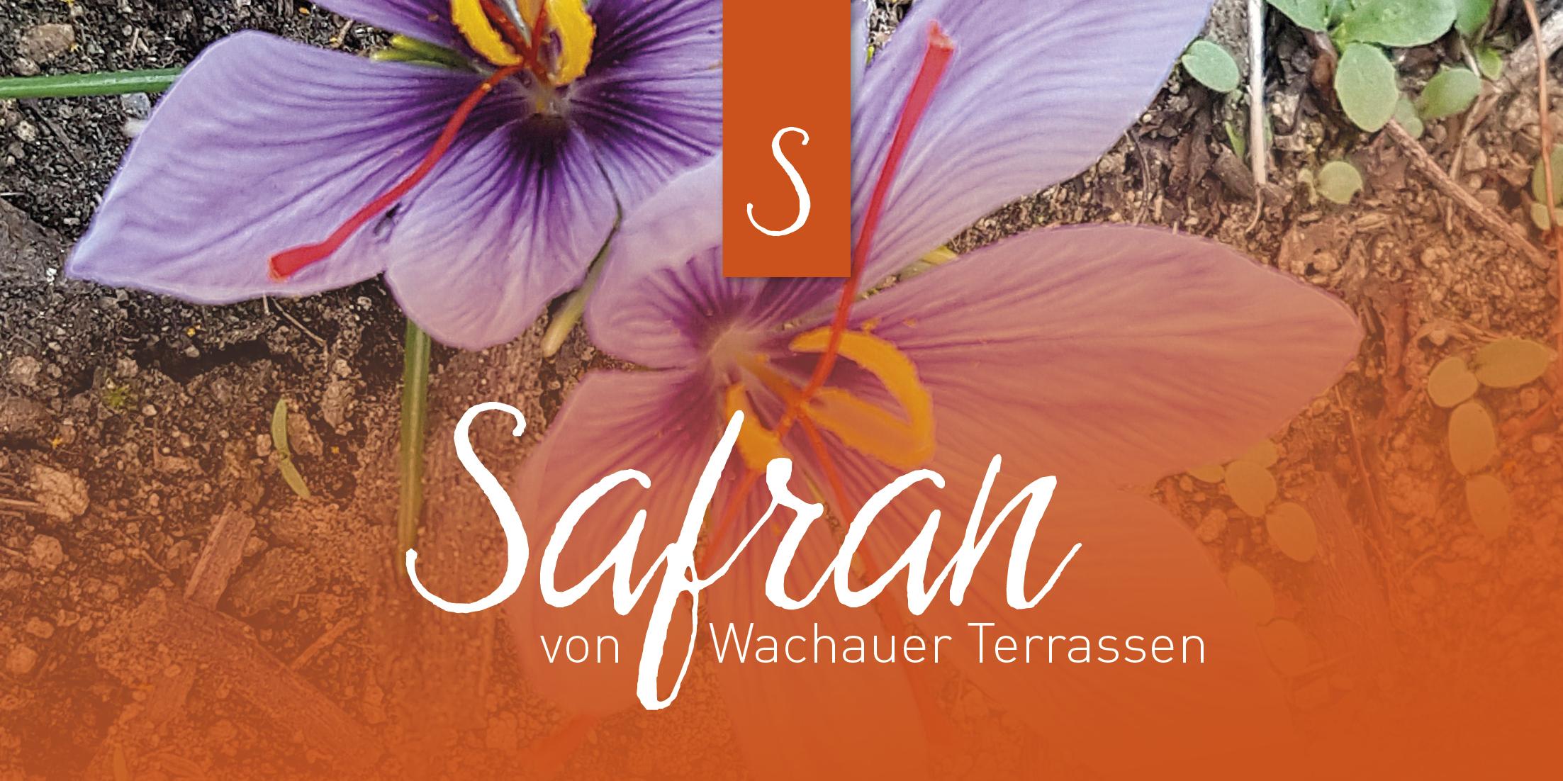 safran wachau